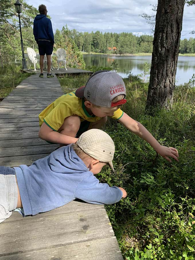 two boys picking blueberries from a wooden walkway