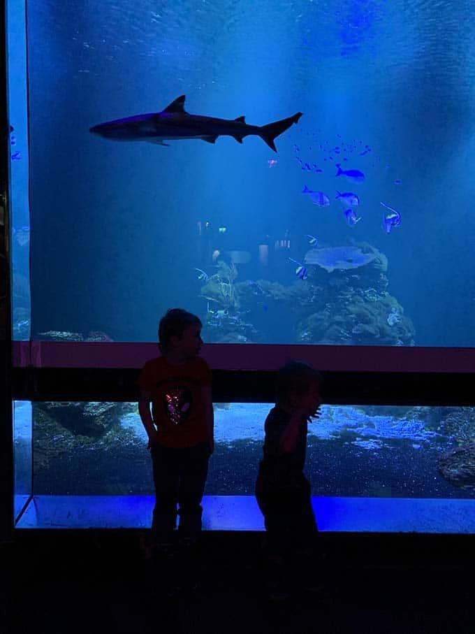 two boys at an aquarium watching a shark swim by