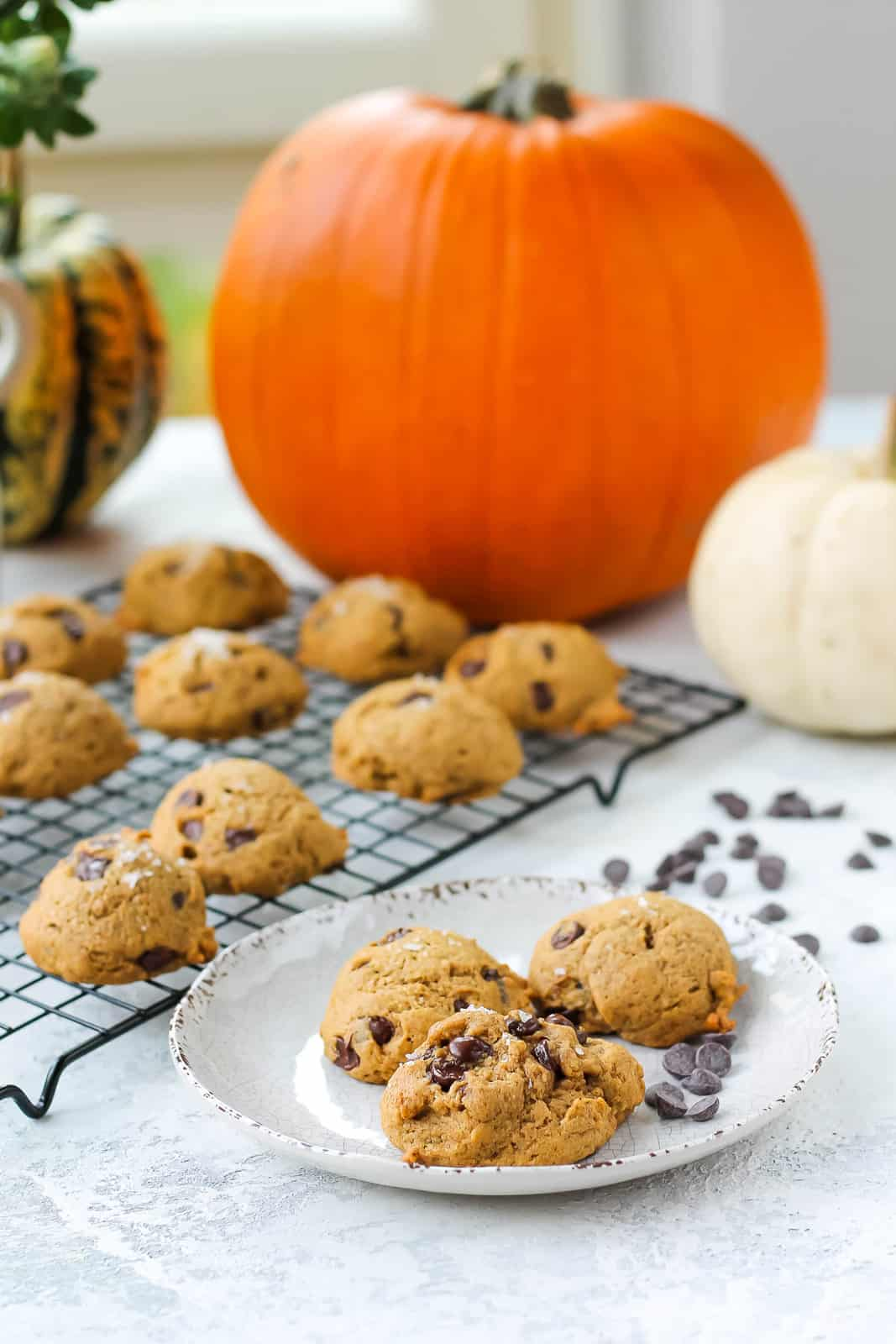 three vegan pumpkin chocolate chip cookies on a white plate with a cooling rack of cookies in the background